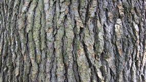 Detalles en corteza de árbol Imagen de archivo libre de regalías