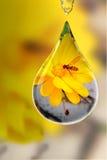 detalles en vidrio Imagen de archivo libre de regalías