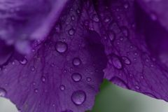 Detalles macros en Flores púrpura imagenes de archivo
