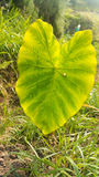 Detalles naturales de Madeira Imagen de archivo
