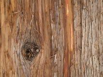 Detalles pelados de la corteza del cedro rojo Imagen de archivo libre de regalías