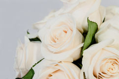 Deteail of a white rose Stock Photography