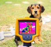 Detecção da perda de calor do cão fotografia de stock