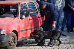 Explosives Detection dog Stock Image
