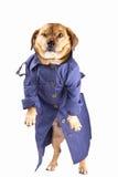 Detective dog Stock Image