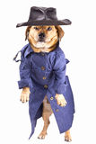 Detective dog. A dog and waterproof in the white background Stock Photos