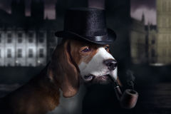 Detective. The hound in hat is very similar on a detective stock photos