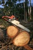 Detención en el midlle del bosque Imagen de archivo libre de regalías
