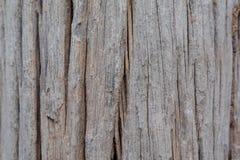 Deterioração de madeira Imagens de Stock