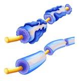Deterioramento della mielina Fotografia Stock