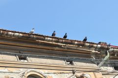 Deteriorated roof. Abandoned and deteriorated roof with pigeon flock stock photo