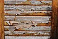 Deteriorated wooden door with varnish peeling off Royalty Free Stock Images