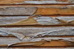 Deteriorated wooden door with varnish peeling off Royalty Free Stock Image