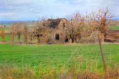 Deteriorating Frontier Home. An abandoned desolate frontier homestead home sits surrounded by dead trees, in a farmed wheat field stock photo