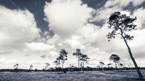 Deteriorating weather over nature in Spring Royalty Free Stock Photo