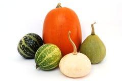Determinada espécie de abóbora vegetal do detalhe Fotografia de Stock Royalty Free