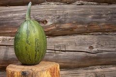 Determinada espécie de abóbora vegetal Fotos de Stock Royalty Free