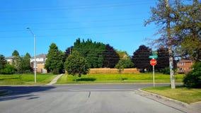 Determinando il fanale di arresto d'avvicinamento su City Road residenziale con gli alberi fertili durante il giorno di estate Pu video d archivio