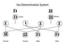 Determinazione del sesso illustrazione di stock