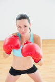 Determined boxer practicing in fitness studio Stock Photography