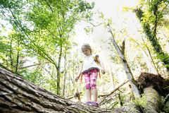 Determined little girl scout standing on a log in the woods. Overcoming fear of heights, being courageous and adventurous, exploring pristine nature. Active Royalty Free Stock Image