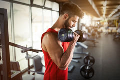 Determined male working out in gym. Lifting weights Stock Image