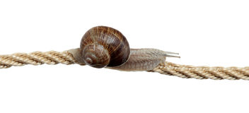 Determined snail on rope Stock Photos