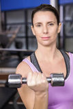 Determined woman lifting dumbbell Stock Images