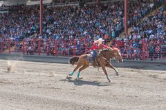 Determined woman pushes horse to finish line at barrel racing competition. Williams Lake, British Columbia/Canada - July 2, 2016: woman pushes her horse to the Stock Photos