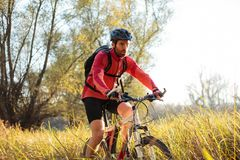 Determined young bearded mountain biker riding along a path through tall grass stock photo