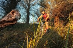 Determined young man riding mountain bike through forest stock photo
