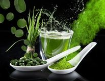 detox cevada nova, superfood do chlorella Imagem de Stock