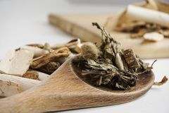 Detox del Naturopath con las diversas hierbas orgánicas crudas fotos de archivo