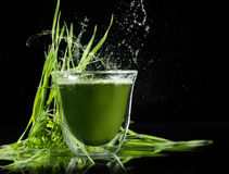 Detox. young barley, chlorella superfood. Stock Image