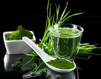 Detox. young barley, chlorella superfood. Royalty Free Stock Photos