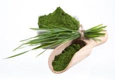 Detox. young barley, chlorella superfood. Royalty Free Stock Photo