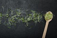 Detoxification, потеря веса, стимулятор невосприимчивости, продукт анти--стресса Молодые ростки микро-зеленого салата и деревянно стоковая фотография