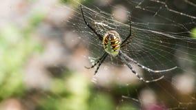 Detrás de la araña grande Imagenes de archivo
