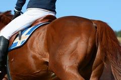 Detrás del caballo se divierte el caballo Deporte ecuestre en detalles Imagen de archivo libre de regalías