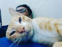 Detrás del gato Imagenes de archivo