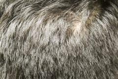 Detrás del man& x27; s dirige mostrar remolino del pelo y menosprecia pérdida de pelo fotografía de archivo