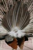 Detrás del pájaro Foto de archivo libre de regalías