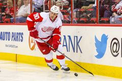 Detroit Red Wings centrum Stephen Weiss Fotografia Stock