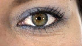 Detta är ett grönt öga Fotografering för Bildbyråer