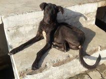 Detta är fotoet av den svarta hunden som restly sitter på trappa royaltyfri foto
