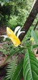 Detta avbildar naturligt hanterar den gula blomman royaltyfri foto