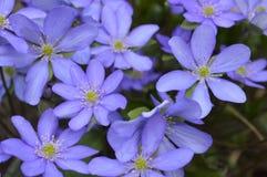 Dettagli dei fiori blu molto piacevoli fotografie stock libere da diritti