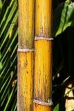 Dettagli dei tronchi di bambù gialli immagine stock libera da diritti