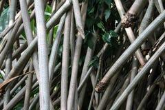 Dettagli dei tronchi di bambù grigi fotografia stock