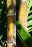Dettagli dei tronchi di bambù nel sole immagine stock
